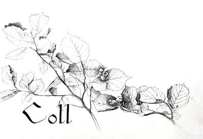 Coll (Hazel) print from The Joycean Forest series